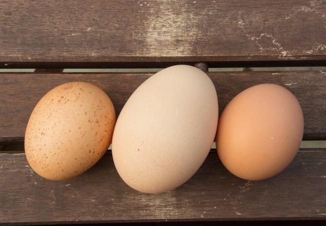 egg (3 of 3)