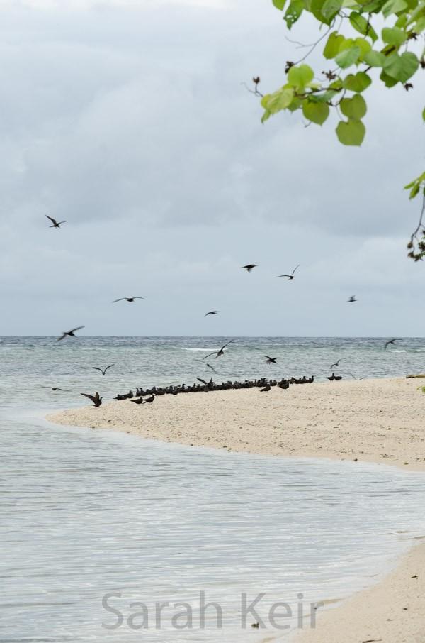 Pigeon Island off Kokopo