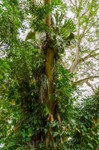 The Pine Tree Lodge, Bulolo