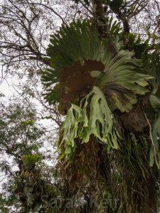 Pine Tree Lodge, Bulolo