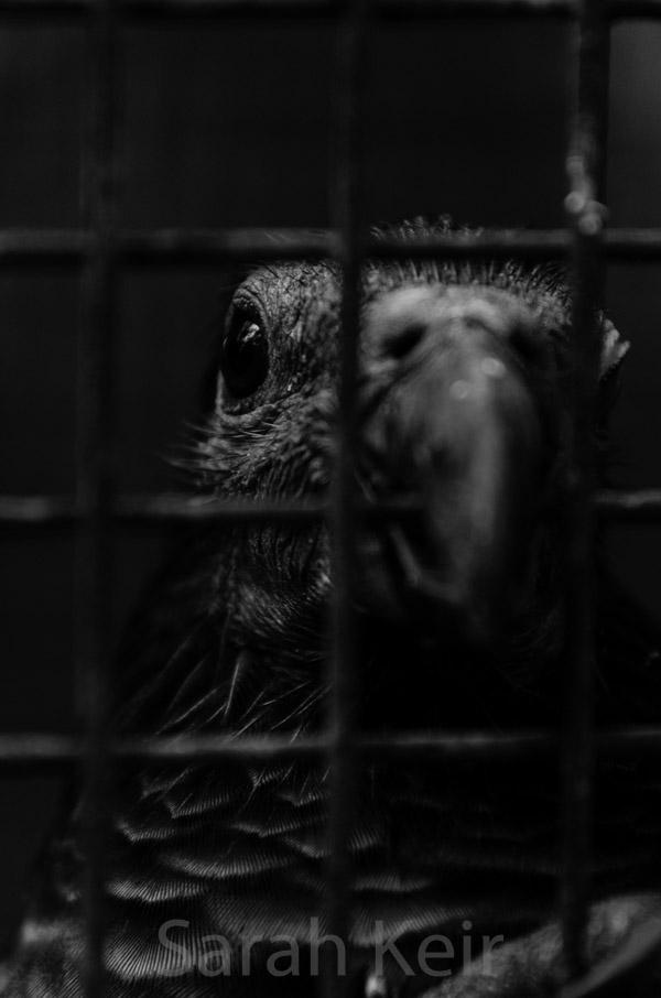 Unhappy parrot
