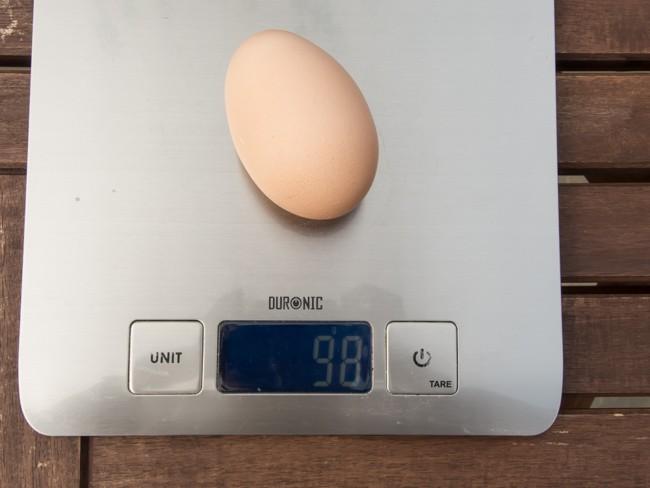 egg (2 of 3)